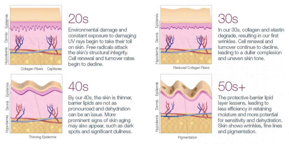 skin-aging-diagram-550@2x